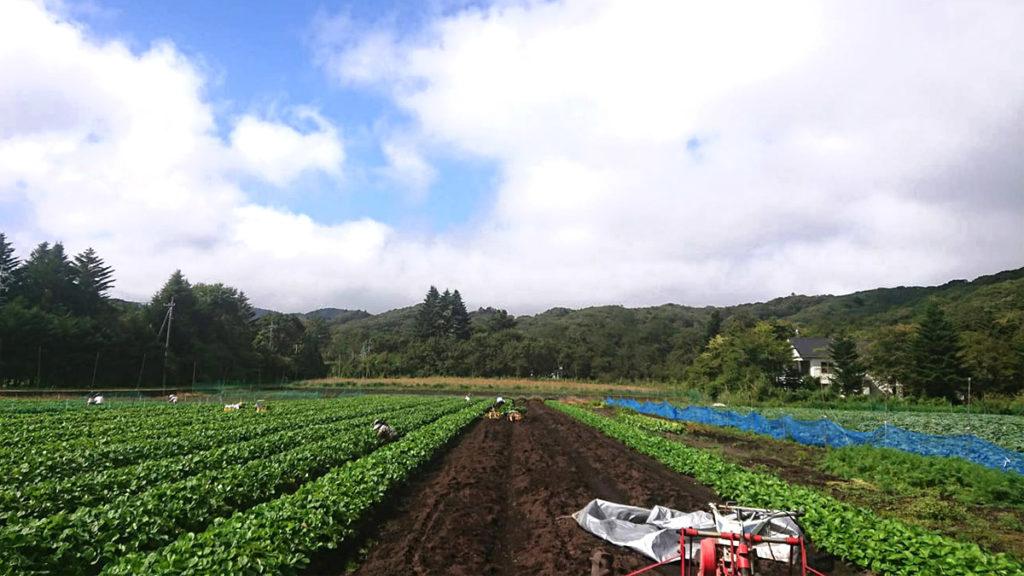 長野県軽井沢市の広大な自然の中で育つ苗