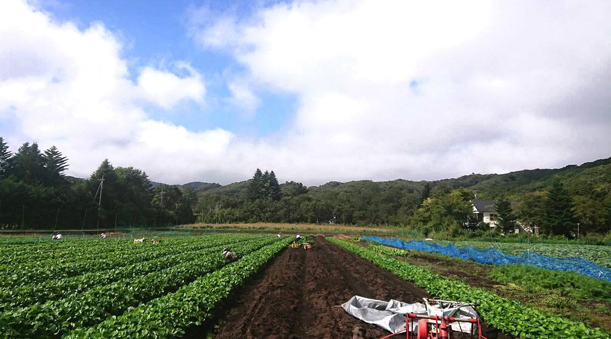 軽井沢で育つ苗