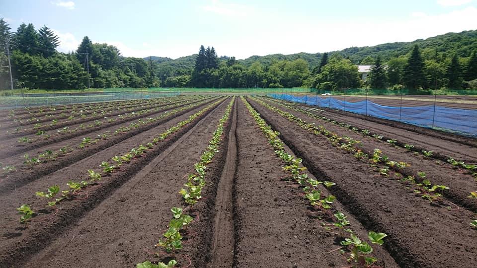 軽井沢の畑