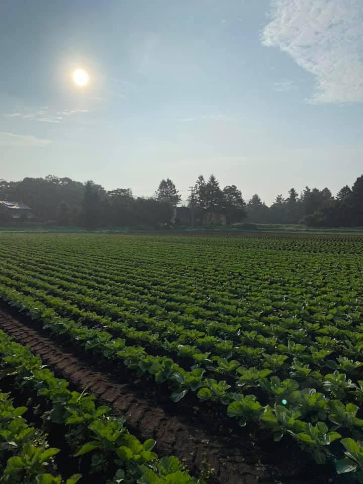 朝靄がかかった軽井沢