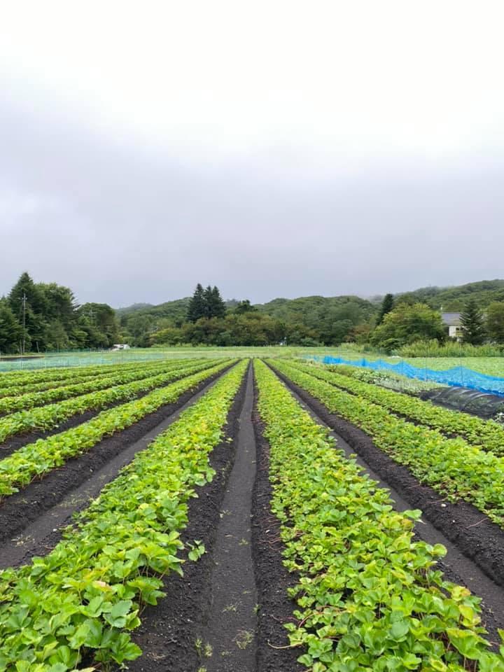 畑に恵みの雨が降りました
