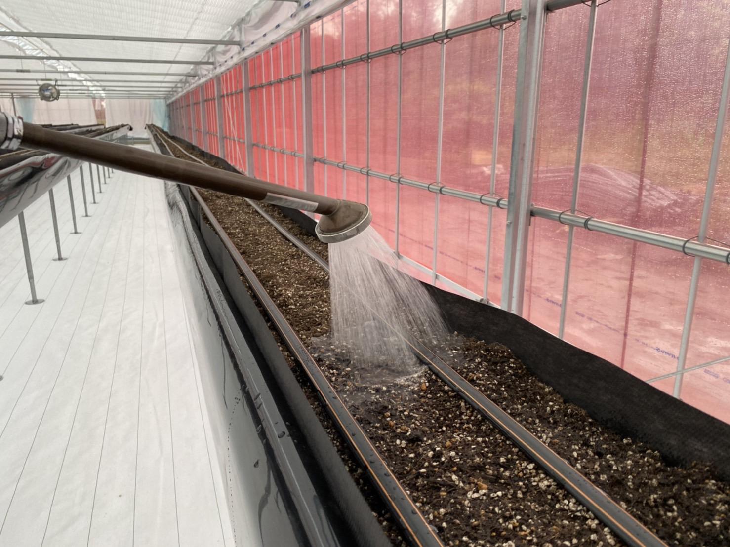 培土のアク抜き作業と点滴について
